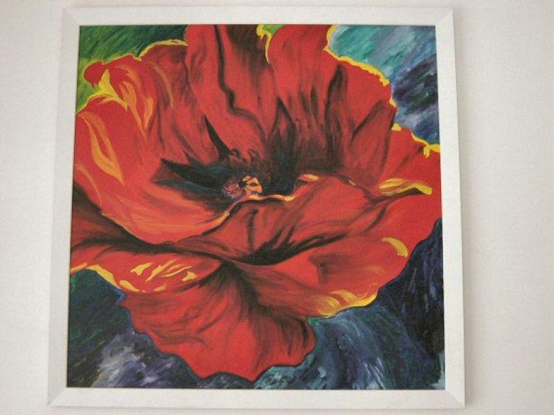 Pipacs virág :